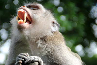 The Sacred Monkey Forest i Ubud - Resa till Bali